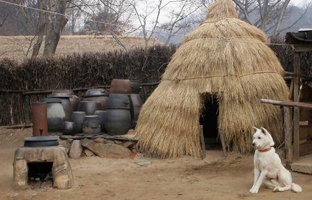 folk village: White Korean dog outside a straw hut at Suwon Folk Village, South Korea