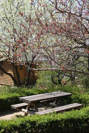 Garden in spring photo