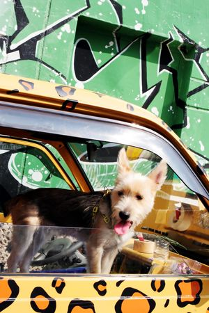Cute dog leaning out of a truck painted with animal print photo