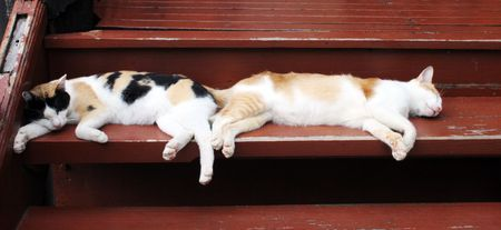 catnap: Two cats sleeping side by side