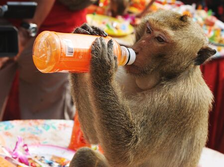 slurp: Monkey drinking from an orange juice bottle
