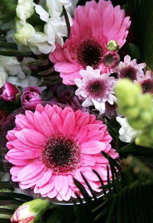Pretty pink flowers and foliage