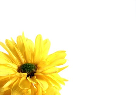 Yellow flower isolated on a white background photo