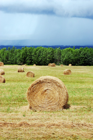 Hay bales in a field - countryside scenic. photo