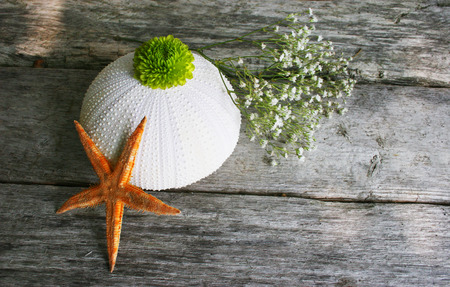 Sea egg, starfish and flowers on white. photo