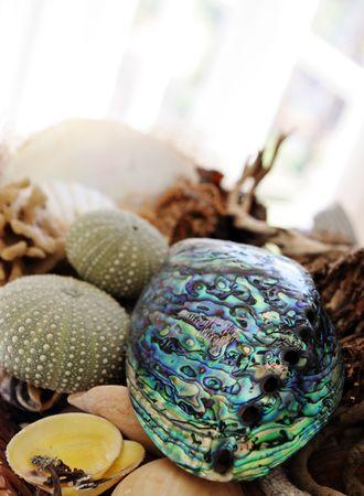 maories: Paua shell y un surtido de objetos de mar.