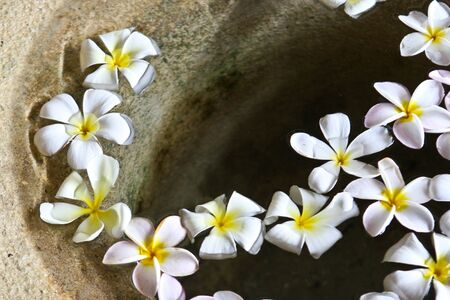 Fragapani flowers floating in water in Thailand - travel and tourism.