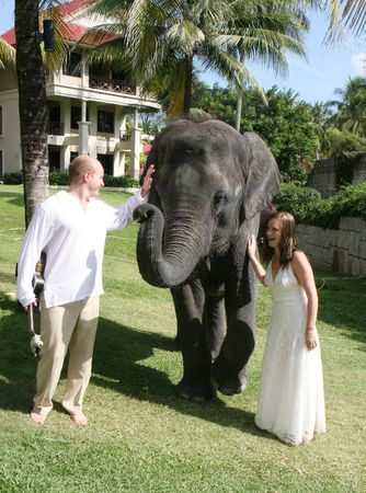 Gorgeous bride and groom with an elephant on their wedding day.