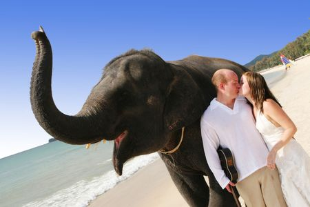 woman beach dress: Bride and groom with an elephant on the beach.