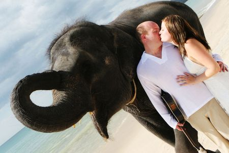 asian bride: Bride and groom with an elephant on the beach.