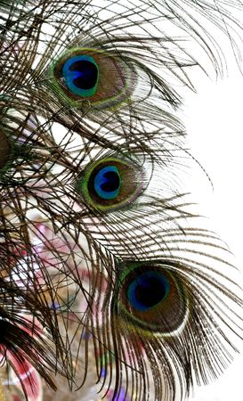 Peacock feathers. Stock Photo - 4733661