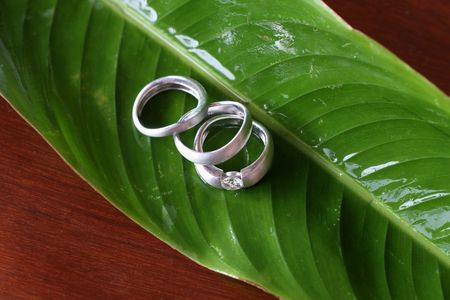 vow: Silver wedding rings on a green leaf. Stock Photo