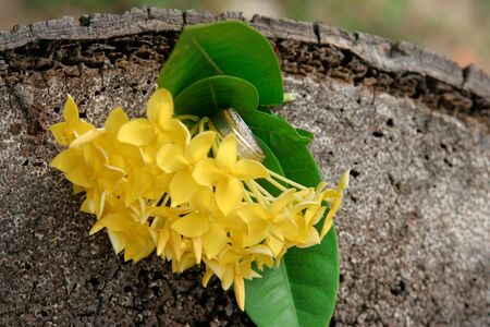 Bunch of yellow tropical flowers. Stock Photo - 7717620