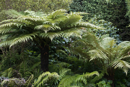 Trees native to New Zealand - travel and tourism. photo
