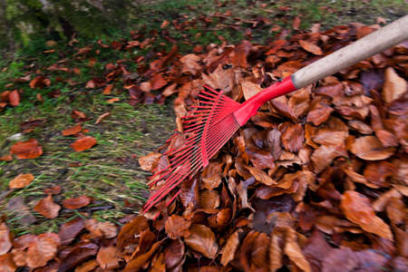 unknown gender: Someone of unknown gender and age raking leaves into a pile. Horizontally framed shot. Stock Photo