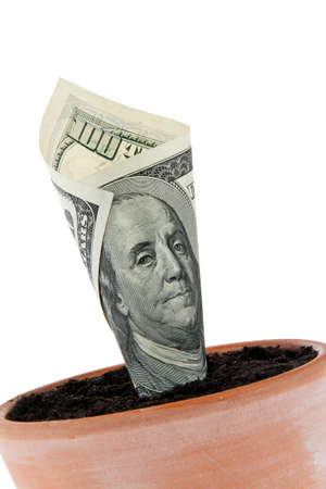 A dollar bill in flower pot. Symbol rates, growth. photo