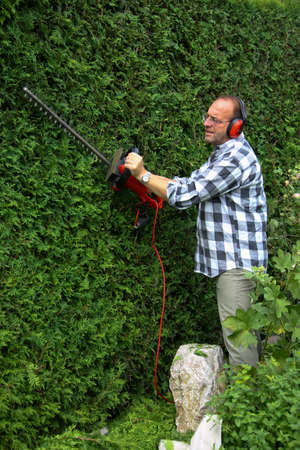 conifer: Man cuts his hedge with a hedge trimmer
