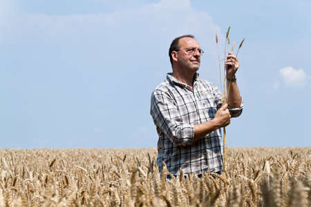 cereal box: A farmer - Farmer in the cereal box. Examined the grain Stock Photo