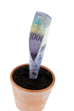 One franc note in flower pot. Symbol rates, growth. photo