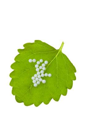 globules: Homeopathy. Globules as alternative medicine. Lying on a leaf.