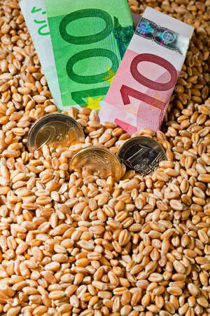 subsidy: Grains of wheat. Yields for crops in agriculture