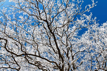 hoar frost: A landscape with hoar frost, frost and snow on tree in winter.