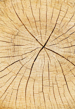 The annual rings of a cut tree trunk in a forest Stock Photo - 9594753