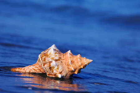 sea food: A shell lies on the sandy beach next to the sea. Beautiful memories of the last holiday. Stock Photo
