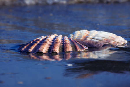 A shell lies on the sandy beach next to the sea. Beautiful memories of the last holiday. Stock Photo - 9751613