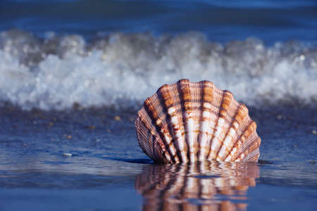 A shell lies on the sandy beach next to the sea. Beautiful memories of the last holiday. Stock Photo - 9751619