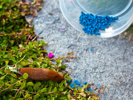 A snail in the garden with vermin killers. Stock Photo - 9837940