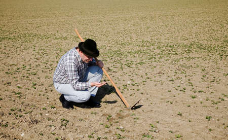 peasantry: A farmer checks the little plants in a field of agriculture.