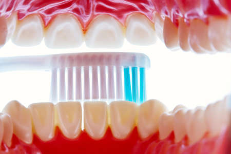 A dental model with a toothbrush when brushing teeth. Brushing teeth prevents tooth decay. photo
