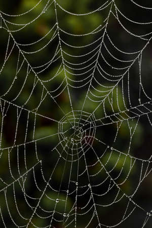 risk free: The spiders web of a spider in the morning dew. Photo icon for network and networking. Stock Photo