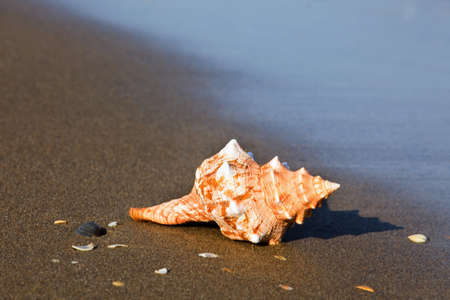 A shell lies on the sandy beach beside the sea. Beautiful memories of your last holiday. Stock Photo - 10514287
