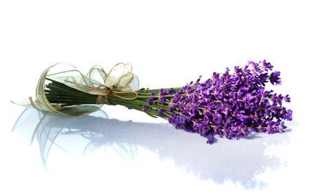 Lavendel Blumen vor einem wei�en Hintergrund isoliert. Lila Sommerblumen.