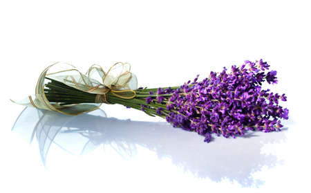 lavender flowers: Lavender flowers isolated against a white background. Purple summer flowers.