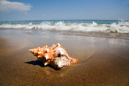A shell lies on the sandy beach beside the sea. Beautiful memories of your last holiday. Stock Photo - 10537532