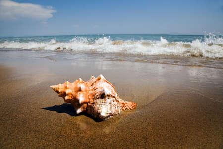 mejillones: Un proyectil se encuentra en la playa de arena junto al mar. Hermosos recuerdos de sus �ltimas vacaciones.