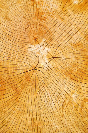 knothole: The annual rings of a tree on a cut tree trunk slice