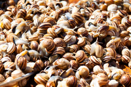 local supply: Many snails at a market in Andalucia are waiting for buyers Stock Photo