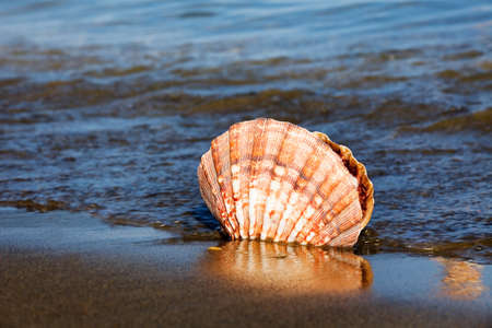 mussel: a shell lies on the sandy beach next to the sea. beautiful memories of your last vacation. Stock Photo