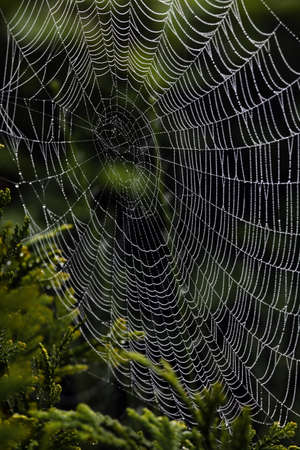 cobweb: the spiders web of a spider in the morning dew. photo icon for network and networking.