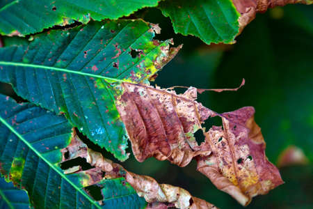 a juicy green leaf dies off in autumn Stock Photo - 10975896