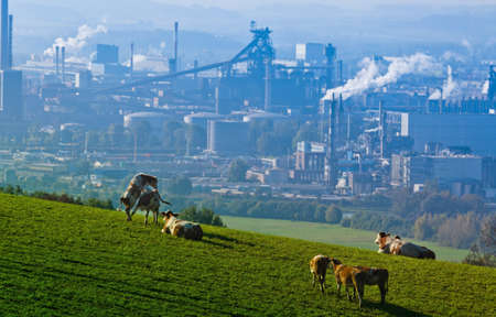 welfare plant: several cows in a pasture. in the background an industrial site Stock Photo