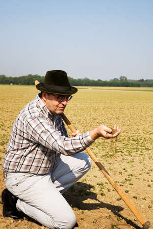 sponsors: a farmer checks the small plants in a field of agriculture.
