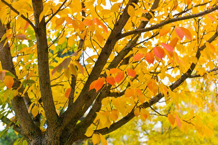 a tree with colorful leaves in autumn. autumn landscape Stock Photo - 11275587