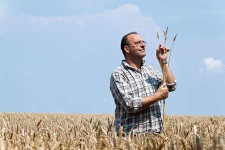 peasantry: a farmer - farmer in the corn field. checks the harvest