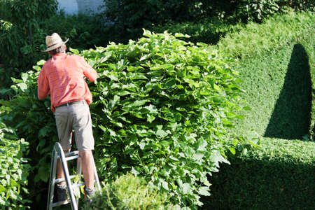 a man cutting a hedge in the garden. yard work. photo