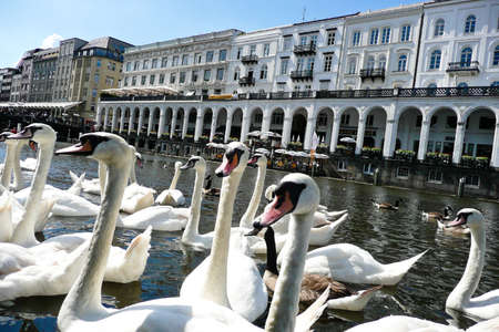 immobilien: the maiden steeg in hamburg (germany) with swans in the foreground.